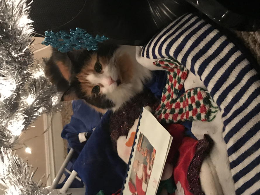 To make us all merrier during the holiday season, here's my cat Koko underneath the Christmas...